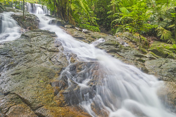 Water stream from forest mountain