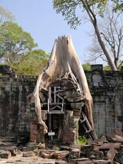 Arbol en ruinas, Preah Khan, Angkor, Camboya