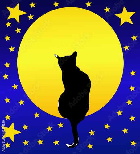 Il Gatto, la Luna piena e un cielo stellato
