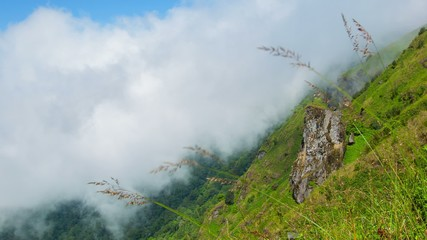 Mountain slope with grass waving in the wind. Highland Thailand.