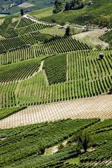 gros plan de vignes et vignobles sur des collines à vin
