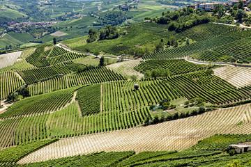 paysage viticole vert et culture des vignes bio