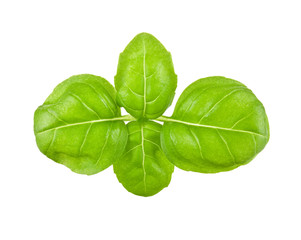 fresh leaves of basil isolated on white background
