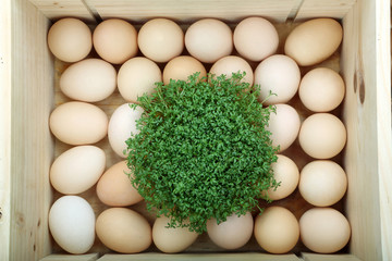 Box with Easter eggs and watercress