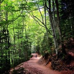 camino dentro de un bosque verde