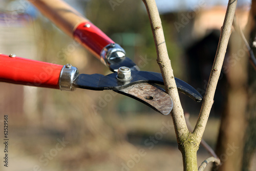 Pruning shears in the garden