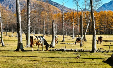 秋の光徳牧場