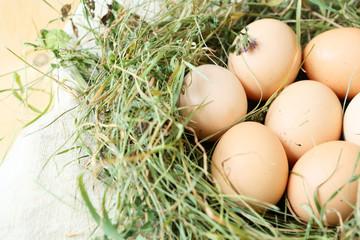 hay nest with eggs