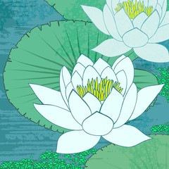 Water lily, flowers on the water.