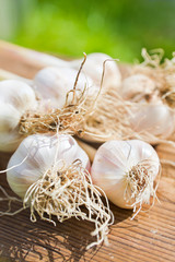 garlic bulbs on wood
