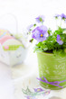 Little pansies in green vintage pot. Selective focus