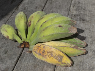 Hand of home grown Bananas New Zealand