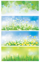 Vector spring nature banners, birch tree leaves, dandelion and c