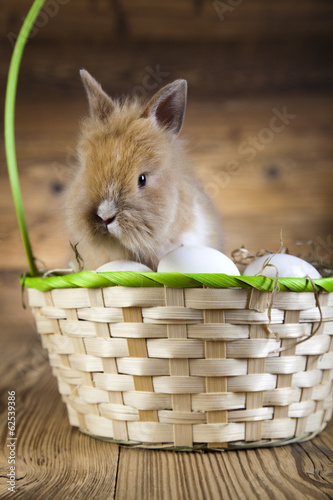 Rabbit in basket with Easter