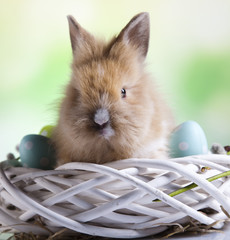 Happy easter, Baby bunny