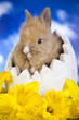 Easter animal, bunny