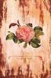 Постер, плакат: Старинная роза