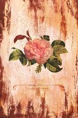 Старинная роза