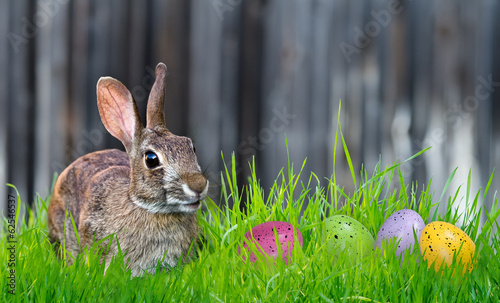 Bunny and Easter eggs in the grass
