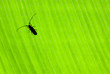 Little beetle on green background