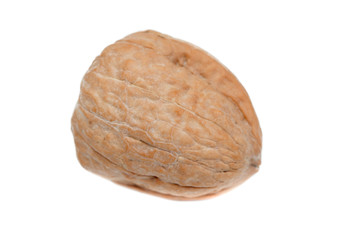 Single walnut isolated
