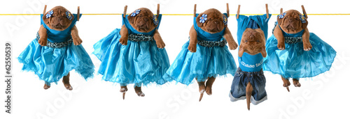 dogs on a clothesline