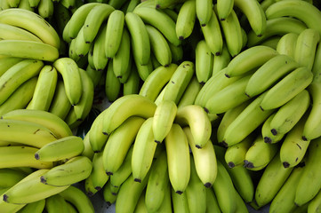 display of green bunches of Bananas in a Grocery Store.