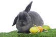 Dwarf rabbit with easter eggs