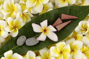 vibrant frangipani with leaf and stones and incense cones