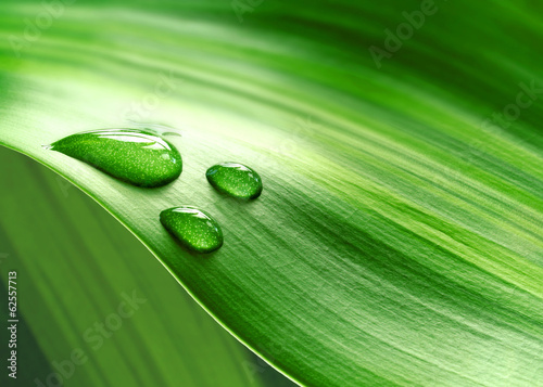 canvas print picture Plantleaf