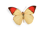 beige and red butterfly isolated on white