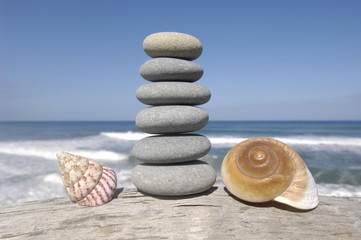 stones with nautilus shell on driftwood at the beach
