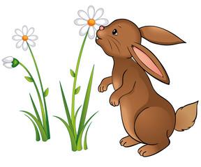 Kaninchen schnuppert an Blume