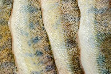 merluccius skin background texture
