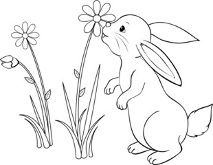Kaninchen schnuppert an Margerite Malvorlge
