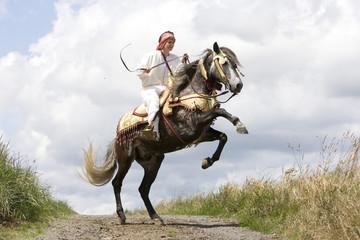 Berber Pferd