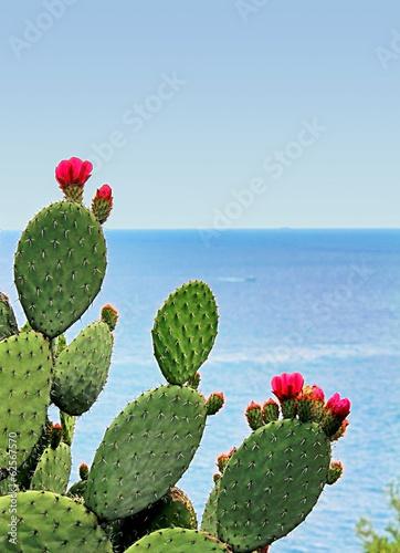 Canvas Cactus cactus fleuri face à la mer