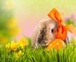 ostern kaninchen in der wiese