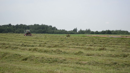 tractor turning raking cut hay and stork bird look food in field