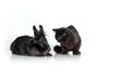 Hase und Katze