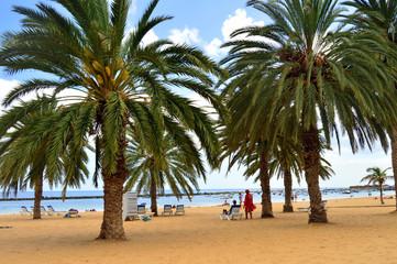 Palmeras en la playa de las Teresitas . Tenerife
