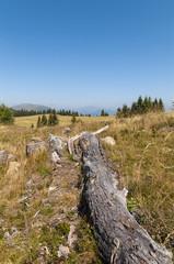 Dead Tree by Verditz (Carinthia, Austria)