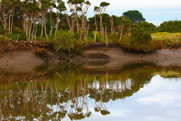 Port Franklin Reflections, Victoria, Australia