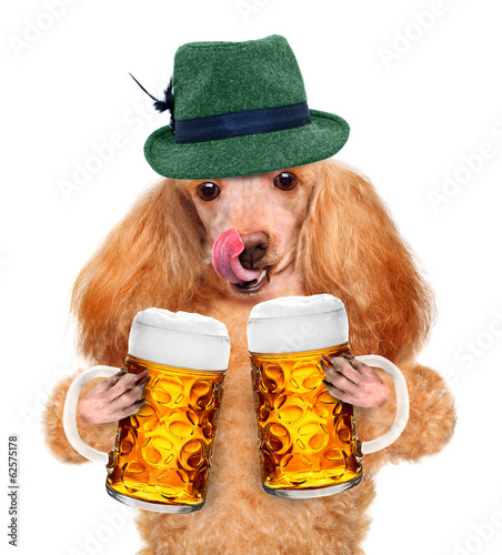 Dog with a beer mug