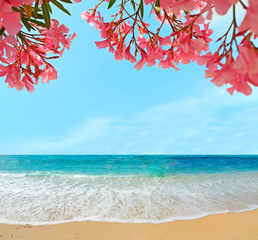 oleanders and sand