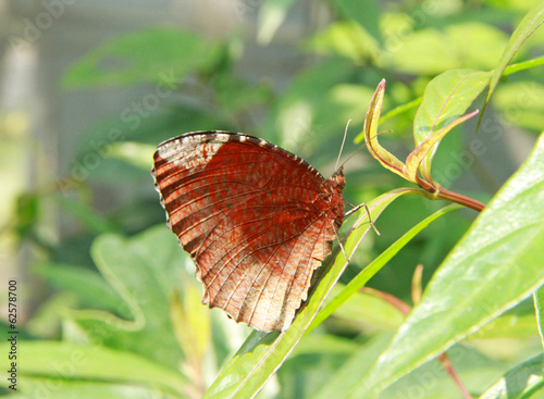 Brown color butterfly