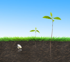 seedling illustration soil