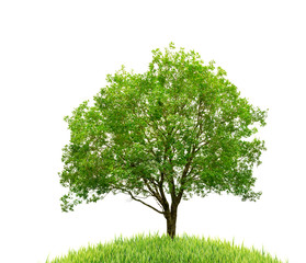 tree and grass isolated