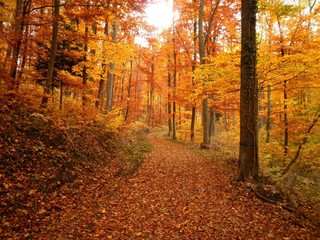 Forest Trail During Fall