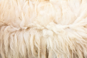 Close up of sheep wool background